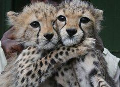 de <b>animales recién nacidos</b>