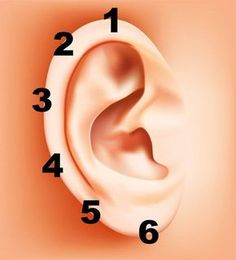 How to Apply Reflexology to the Ears. Ear reflexology is not as well-known as foot or hand reflexology, but can relieve stress and pain. Application of ear reflexology is fast and easy. You massage pressure points on the ear to treat aches. Health And Nutrition, Health And Wellness, Health Tips, Health Fitness, Ear Health, Ear Reflexology, Tai Chi, Back Pain, Deep Brain Stimulation