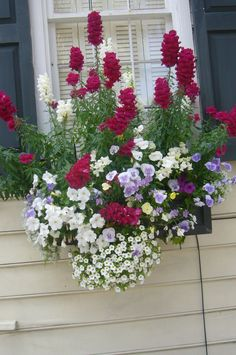 Window box in Charleston - what a striking arrangement of blooms! I love the colour combination, especially against the cream and navy
