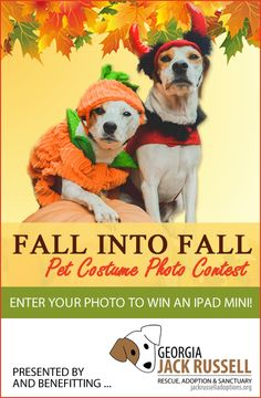 """Our """"Fall into Fall"""" pet costume photo contest is now underway! Enter your photo for a chance to win an iPad Mini and other great prizes!"""