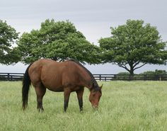 Hadif Cat(2004)(Filly) Hadif- Cat's Meow By Storm Cat. 4x5 To Bold Ruler & Nearctic, 5x5 To Native Dancer. 4 Starts 1 Win 1 Third. $9,650. Dam Of Fiftyshadesofgold & Sword Trick.