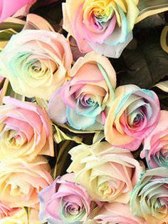 Pastel-colored Rainbow Roses