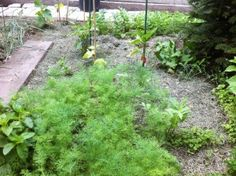 Aproape totul despre rosii - magazinul de acasă Stepping Stones, Solar, Outdoor Decor, Gardening, Plant, Stair Risers, Lawn And Garden, Horticulture