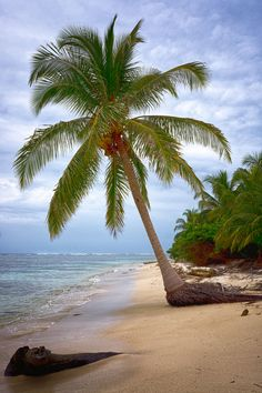 Palm tree and sand - gorgeous