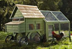 Backyard Chickens - Bob Vila Radio