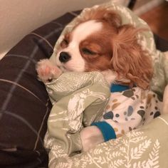 Find images and videos about dog, puppy and perro on We Heart It - the app to get lost in what you love. King Charles Puppy, Cavalier King Charles Dog, King Charles Spaniel, Cute Baby Puppies, Cute Dogs And Puppies, Baby Dogs, Doggies, Super Cute Animals, Cute Little Animals
