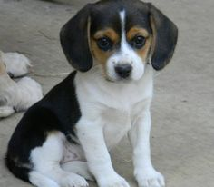 This is my Lucy as a Puppy! Love, love her! Photo credit to Grace! Notice Rudy's paws in the background!