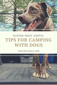 Our top tips and advice for camping with dogs. Check them out and your next family camping trip with your dog will be a super easy. #TentsnTrees #campingdoghacks Kayak Camping, Camping Guide, Camping Hacks, Camping Hammock, Beach Camping, Winter Camping, First Time Camping, Camping With Kids, Family Camping