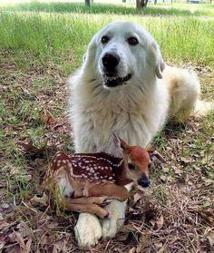 cane con piccola cerbiatta