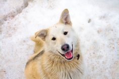 Snow Can Make Your Pet Sick!