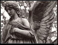 wings of an angel von Tenebrae .