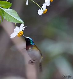 Beautiful Birds, Animals Beautiful, Beautiful Pictures, Good Day Images, Animals And Pets, Cute Animals, Bird Gif, Nature Gif, All Birds