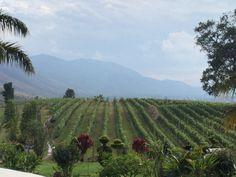 Ayethayar wine yard