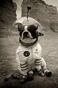 dog in space suit - photo #13