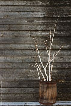 Birch branches lit with string of tiny lights gathered in rustic barrel by Tanateel   Stocksy United