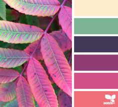 cream green blue purple coral pink