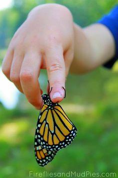 Raising butterflies, moths, and caterpillars is educational and fun for kids! #firefliesandmudpies