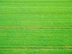 Green by martynmac, via Flickr