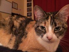 Chloe Cat | Pawshake