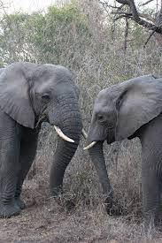 Keep an eye out for the resident herd of elephant. Herd Of Elephants, Game Reserve, Under The Stars, Beautiful Places, Camping, Eye, Stone, Pictures, Animals