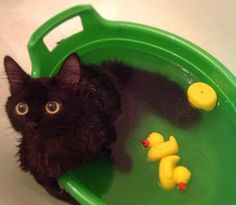Bath Time Fun…                                                       …