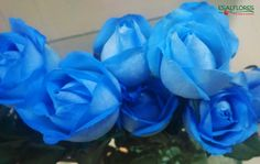 As rosas azuis possuem um significado especial: representam o sentimento infinito de respeito, gratidão e admiração.