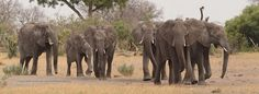 Elephant family from Africa Geographic