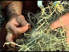 Vuur in de Prehistorie (Filmpje) - Filmpjes kijken op Minipret.nl Lab, Mystery Of History, Iron Age, Worksheets For Kids, School, School Projects, Fire, Historia, Kids Worksheets