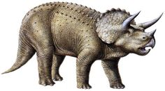 """Triceratops (a.k.a. """"ceratops"""").  ;)"""