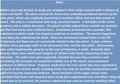 Aloes in biblical times
