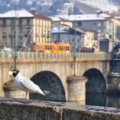 Torino che non è New York I fatti di cronaca ...