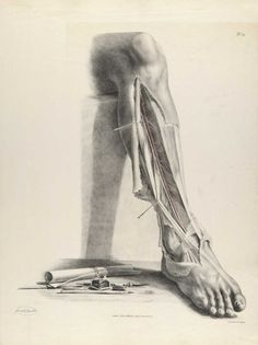 "☤ MD ☞☆☆☆ Anterior tibial artery  - Richard Quain   (http://www.pinterest.com/pin/287386019946913547/) and Joseph Maclise, from ""The anatomy of the arteries of the human body, with its applications to pathology and operative surgery"", 1844 (https://pinterest.com/pin/287386019946919258/)."