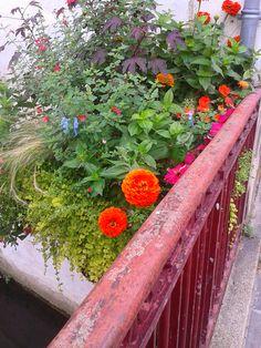 Un beau bouquet sur Dreux  ...! ! !