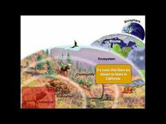8 Levels Of Organization Ecosystem Ideas Life Science Ecosystems Teaching Biology