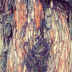 A bit of bark Romsey. Rachel Reynolds, Hampshire, Layers, Texture, Inspired, Photography, Inspiration, Instagram, Layering