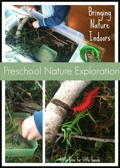A fun nature inspired Sensory Bin to gather out in the back yard and our throw it together Tuesday trays all about bugs, counting and fine motor skills Nature Activities, Outdoor Activities For Kids, Spring Activities, Sensory Activities, Toddler Activities, Sensory Bins, Sensory Play, Sensory Table, Teaching Time