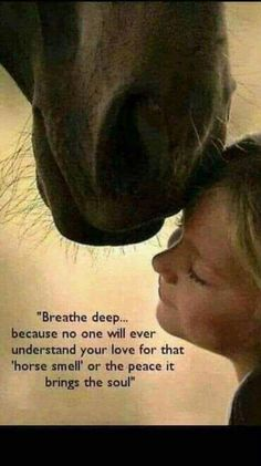 no one will ever understand your love for that horse smell or the peace it brings to the soul. Pretty Horses, Beautiful Horses, Animals Beautiful, Equine Quotes, Equestrian Quotes, Foto Website, Horse Riding Quotes, Horse Love Quotes, Rodeo Quotes
