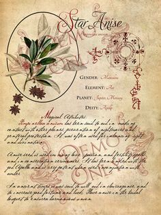 Spell, Hexes and Charms Book Of Spells (76 pages)