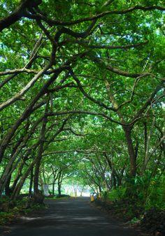 Waianapanapa State Park Hana Maui I walked this with my friend John who's B&B is not far from here!