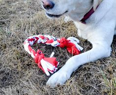 See how to make a toy for your dog with old t-shirts! No sewing or crafty skills required. :)