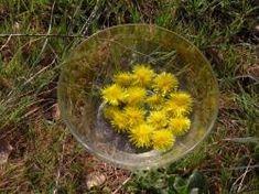 par Floral, Plants, Alchemy, Flowers, Plant, Flower, Planets