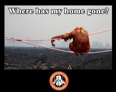 Don't buy products using palm oil. Palm oil plantations destroy orangutan habitat. Here's how: http://www.ecofriendlylink.com/blog/avoid-palm-oil/