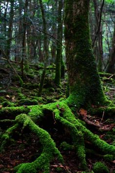 Aokigahara forest, Japan - Aokigahara is known as the Sea of Trees, a 35 km forest that lies at the north west base of Mount Fuji in Japan. The forest, which has a historic association with demons in Japanese mythology, is a popular place for suicides. 青木ヶ原