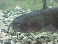 Catfishing Tips Tricks And More