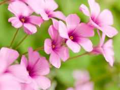 Close-up flowers macro nature pink flowers- Image 2560x1920