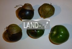 LAND-ei Tomatillo Landing, Vegetables, Food, Eggs, Fresh, Essen, Vegetable Recipes, Meals, Yemek