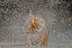 2012 Nat Geo Recognition by Ashley Vincent on 500px