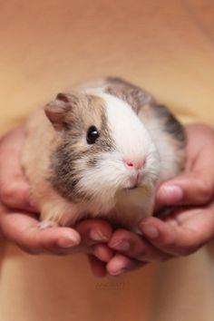 Piggie!!!
