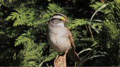 Season 1 Ep 2: Songbirds, NC