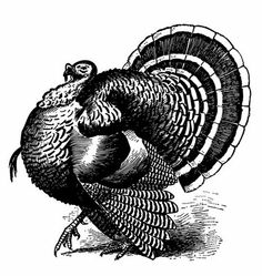 Here's an assortment of Thanksgiving pilgrim and turkey graphics and clip art for your holiday projects. The pilgrim is rather interesting as he's on the primitive side and is from The second turkey has coloring book appeal and the … Continued Thanksgiving Pictures, Vintage Thanksgiving, Turkey Drawing, Turkey Painting, Printable Turkey, Turkey Images, Wood Burning Patterns, Wild Turkey, Turkey Time